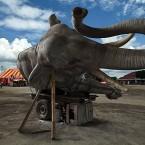 Sleeping elephant Alun-alun Kraton